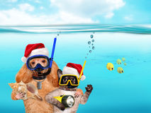 Dog with cat diver in red Christmas hat. Dog with a cat divers underwater. Humor Stock Image