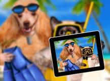 Dog with cat diver. Stock Photos
