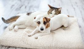 Dog and cat. At home. Pets frinship royalty free stock image