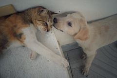Dog and Cat. A dog and a cat looking out for each other Stock Image