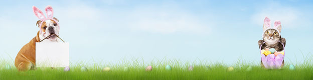 Dog and Cat Easter Half Banner Royalty Free Stock Images