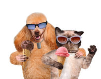 Dog with a cat eat ice cream. Royalty Free Stock Photos