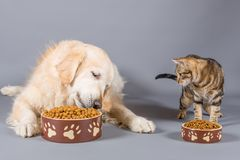 Dog and cat eating. Dry food in bowls Royalty Free Stock Image