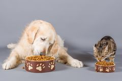 Dog and cat eating Royalty Free Stock Photos