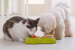 Dog and cat eating natural food from a bowl stock photography