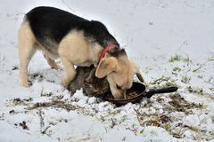 Dog and cat eating from the same dish as a best friends. In the winter time Royalty Free Stock Photography