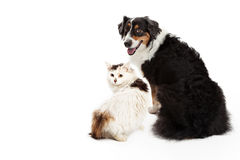 Dog and Cat Facing Forward Looking Back Stock Images