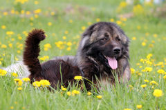 Dog and cat in flowers. Dog and cat sitting in field with yellow flowers Royalty Free Stock Images