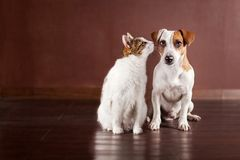 Dog and cat friends. Dog and cat at home. Friendship pets Stock Images