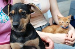 Dog and cat in friends hands Royalty Free Stock Photos