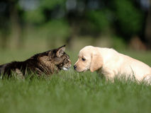 Dog and cat friendship Royalty Free Stock Image