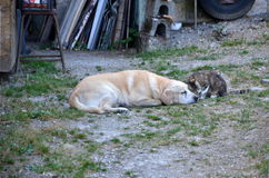 Dog and cat friendship Stock Photo