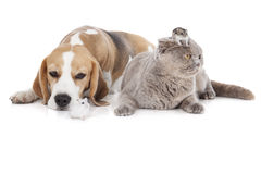 Dog, cat and hamster Stock Photos