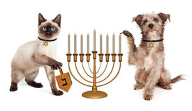 Dog and Cat Hanukkah Celebration. Cute puppy dog lighting a menorah candelabrum and a kitten spinning a wooden dreidel in celebration of the Jewish Hanukkah