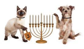 Dog and Cat Hanukkah Celebration Stock Images