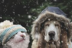 Dog and cat hat in snowfall. Color image royalty free stock image