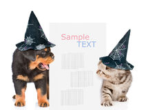 Dog and cat with hats for halloween peeks out from behind the billboard and looking at text. isolated on white background Stock Images