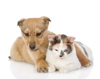 The dog and cat have a rest together. Stock Photos