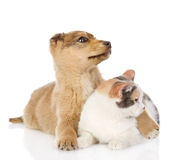 The dog and cat have a rest together Stock Photos