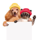Dog with a cat holding in his paws white banner. Royalty Free Stock Photos