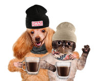 Dog with a cat, holding in the paws of a cup of cocoa. Stock Photography