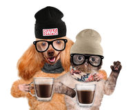 Dog with a cat, holding in the paws of a cup of cocoa. Royalty Free Stock Images