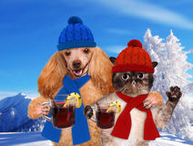 Dog with a cat, holding in the paws of mulled wine. Royalty Free Stock Image