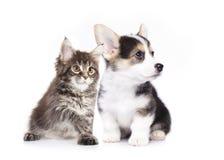 Dog and cat. Isolated on white background Stock Photos