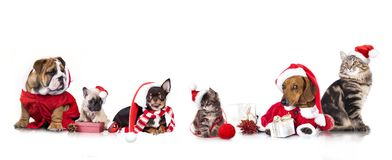 Christmas dog and cat. Dog and cat and kitens wearing a santa hat, Christmas dog and cat Royalty Free Stock Images