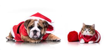 Puppy and Christmas kitten stock photography