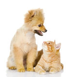 The dog and cat look at each other. Stock Photos
