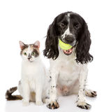 Dog and cat. looking at camera. Isolated on white background royalty free stock images