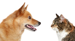 Dog and Cat looking at each other Royalty Free Stock Photo