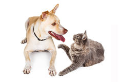 Dog and Cat Looking at Each Other Royalty Free Stock Photos