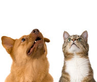 Dog and cat looking up. Add your text above Royalty Free Stock Photos
