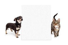 Dog and Cat Looking Up at Tall Blank Sign. A small mixed breed dog and a Bengal cat looking up at a blank white sign to enter your message onto Stock Images