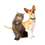 Dog and Cat Looking Up Together Stock Images