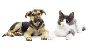 Dog and cat looking Royalty Free Stock Images