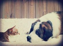 Dog and cat lying Stock Image