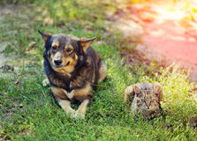 Dog and cat lying together on the grass Stock Photo