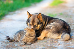 Dog and cat lying together Stock Images