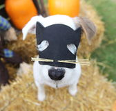 Dog with cat mask Royalty Free Stock Photos