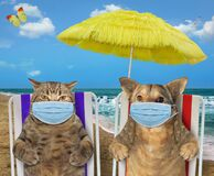 Dog  and cat in masks rest on beach