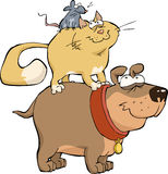 Dog cat and mouse Stock Image