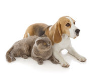 Dog, cat and mouse. Isolated on white background royalty free stock image