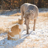 Dog and cat nose to nose in a snowy field Royalty Free Stock Photography