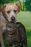 Dog and a cat Stock Photo