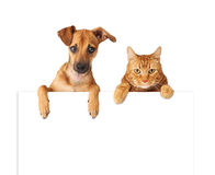 Dog and Cat Over Blank Sign. A cute dog and cat hanging over a blank white sign for you to enter your message on Royalty Free Stock Photography