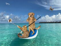 Dog with cat on paddleboard