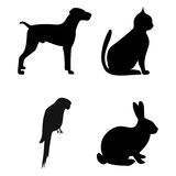 Dog, Cat, Parrot, Rabbit silhouettes - illustration Stock Photos